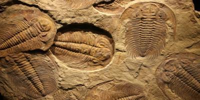 اكتشاف حفريات أقدم رئيسيات على وجه الأرض
